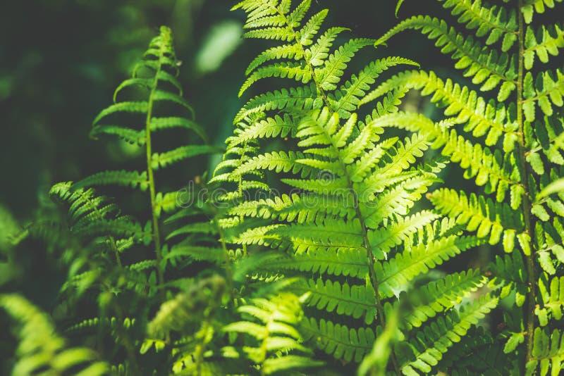 Tropisk ormbunkebakgrund, sommarnatur arkivbilder
