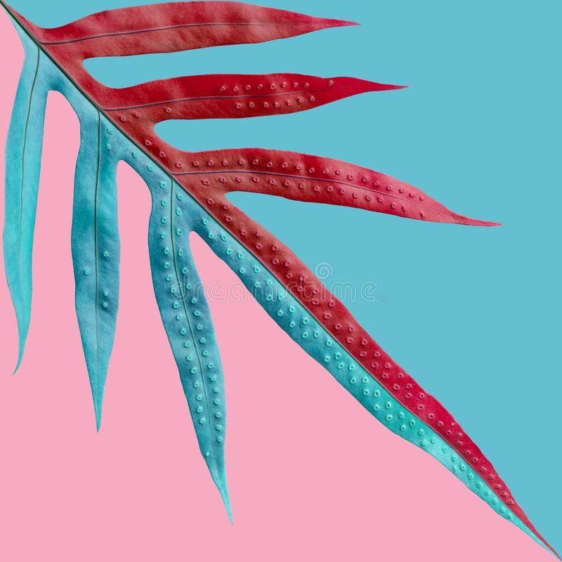 Tropisk ormbunkesidamodell på bakgrund för pastellfärgad färg Natur arkivbild