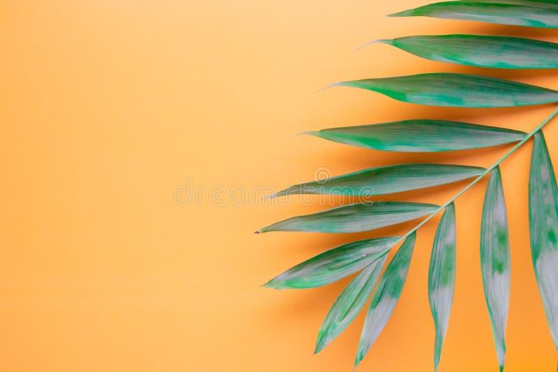 Tropisk palmbladmodell p vektor illustrationer