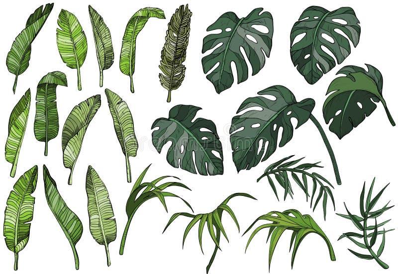 Tropisk palmbladuppsättning för vektor, djungelväxter vektor illustrationer
