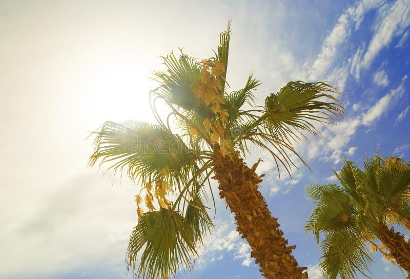 Tropisk palmträd med färgrikt bokehsolljus på bakgrund för abstrakt begrepp för solnedgånghimmelmoln Sommarsemester och naturlopp arkivfoto