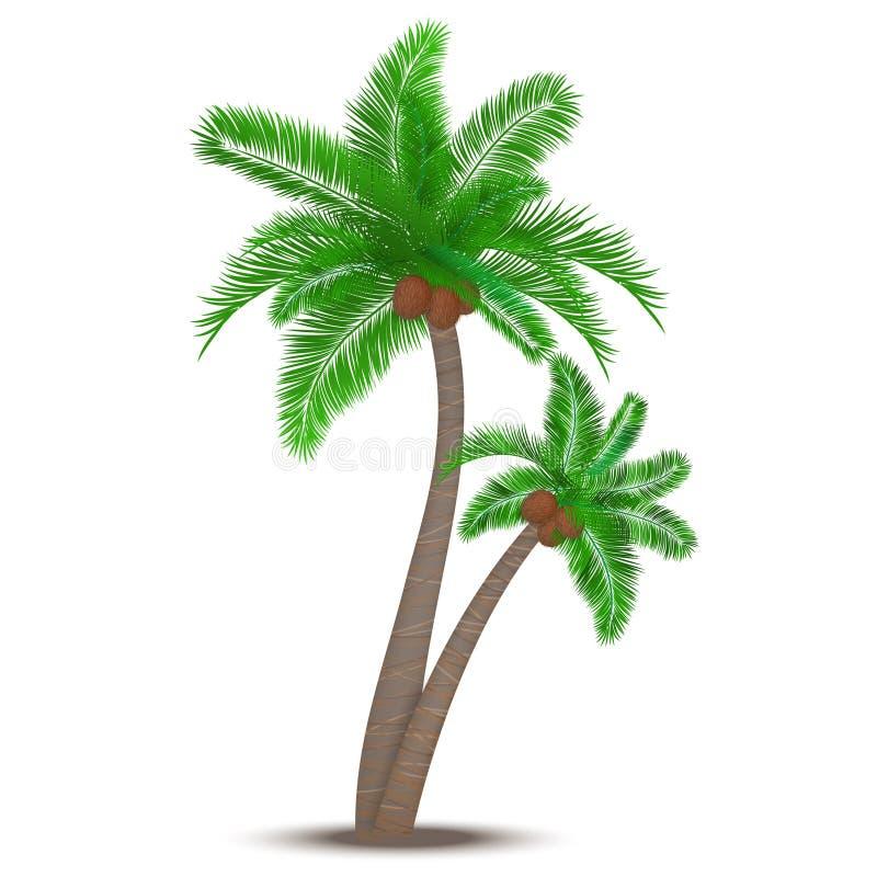 Tropisk palmträd med kokosnötter royaltyfri illustrationer