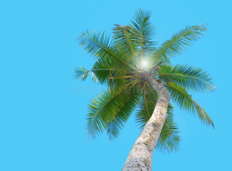 Tropisk palmträd under blå himmel arkivbild