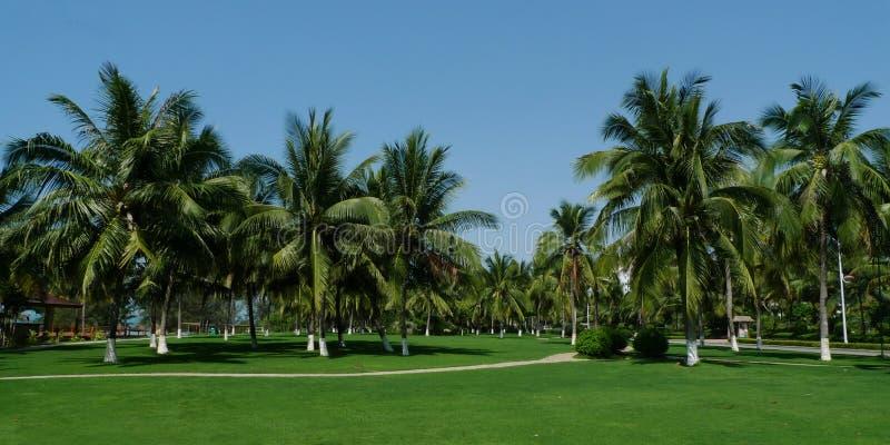 tropisk park royaltyfri foto