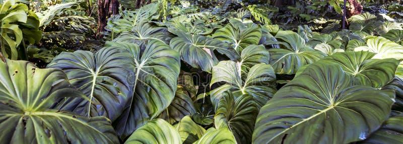 Tropisk rainforest royaltyfri foto