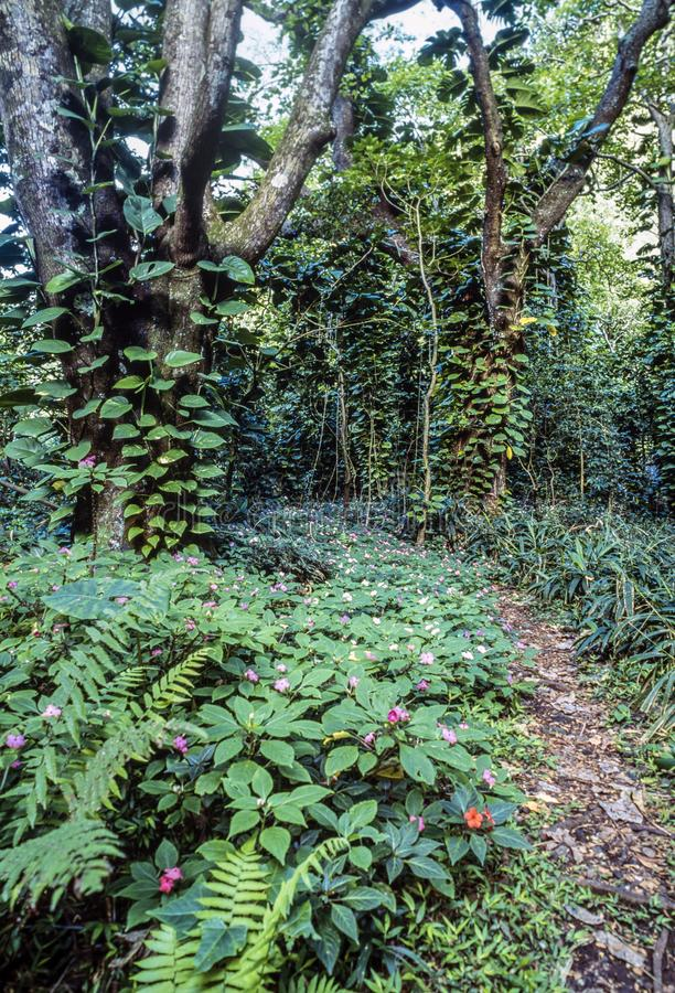 Tropisk Rainforest i Hawaii royaltyfria foton