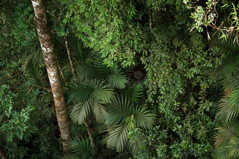 Tropisk rainforest, Khao Yai nationalpark Thailand (världsHet arkivfoto