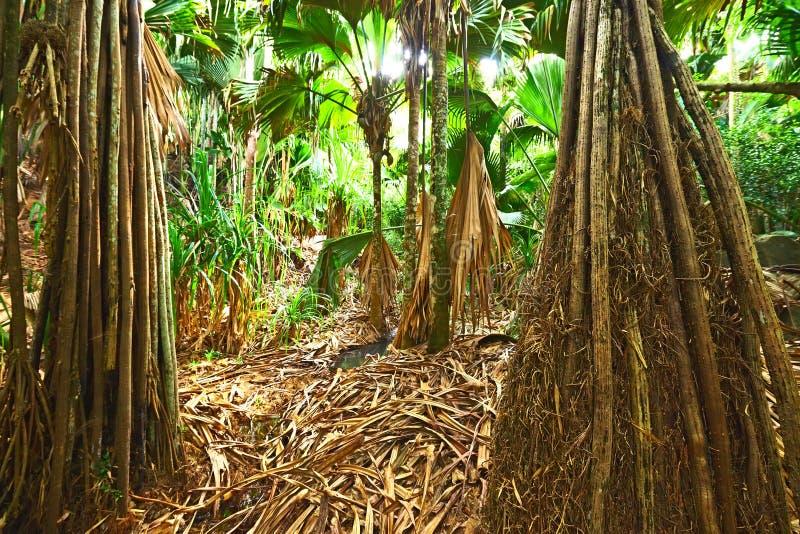 Tropisk rainforest på Seychellerna arkivfoto