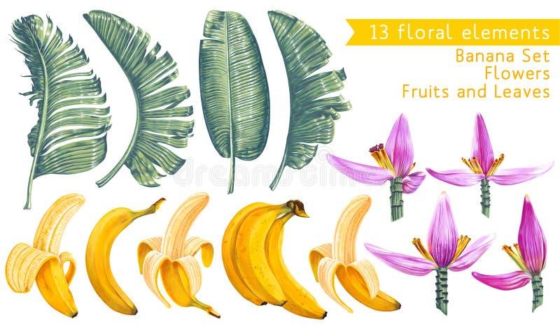 tropisk samling Banansidor, frukter och blommor i realistisk stil med höga detaljer stock illustrationer