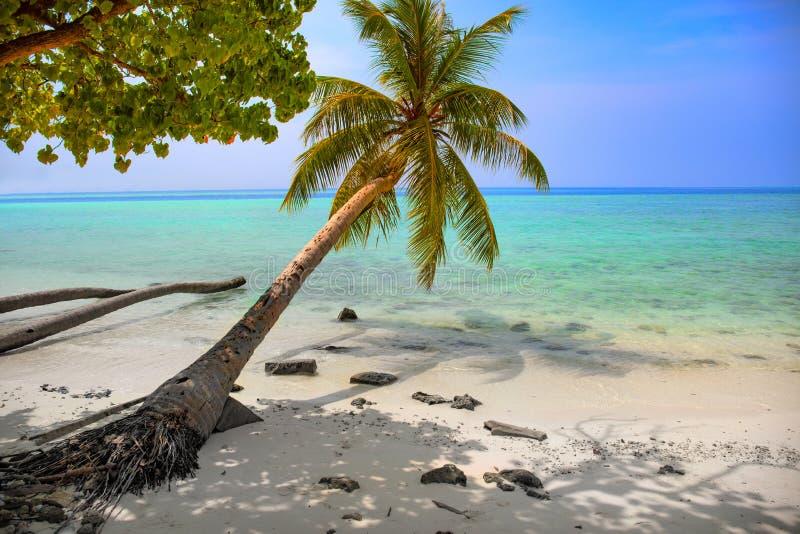Tropisk seascape med gröna palmträdsidor, havsikt med vawes och att gömma i handflatan filialer arkivfoto