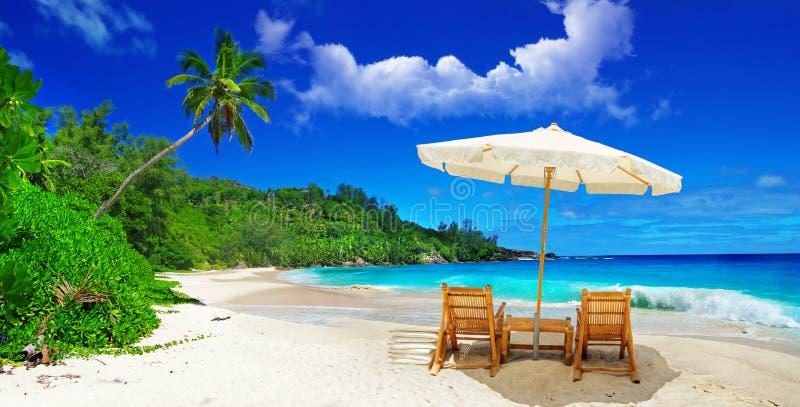 tropisk semester royaltyfri foto
