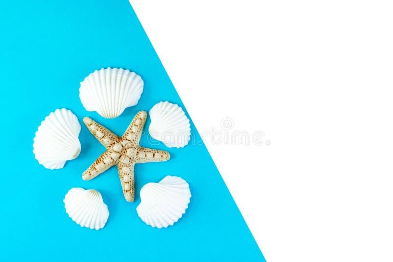 Tropisk semesterbakgrund f?r sommar Sjöstjärna som omges av vita snäckskal på en blå bakgrund Kopieringsutrymme, b?sta sikt arkivbilder