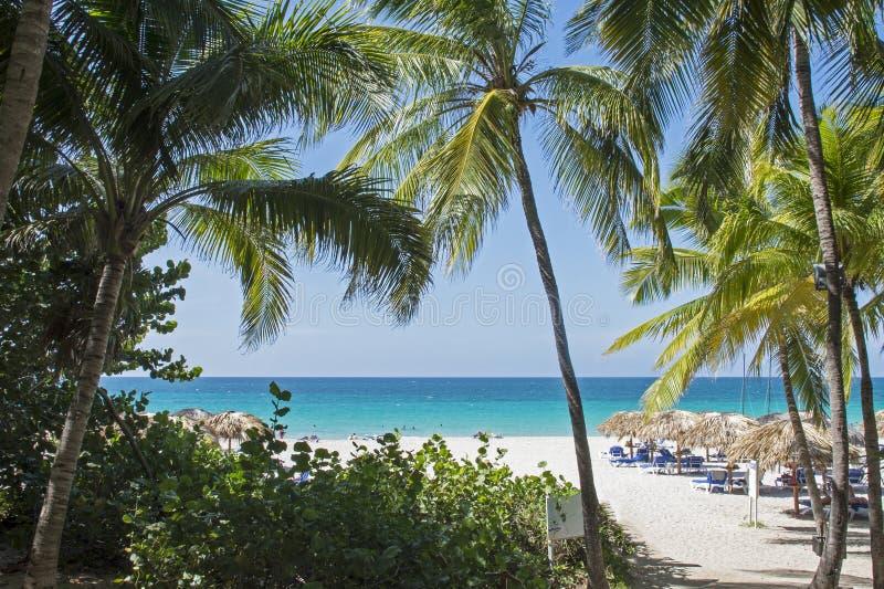 Tropisk semesterortstrand i Kuba arkivfoto
