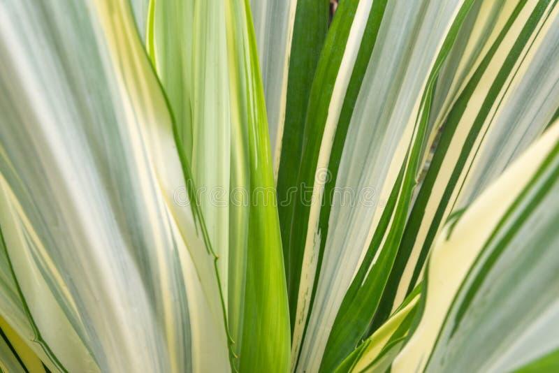Tropisk sidabakgrund arkivfoto