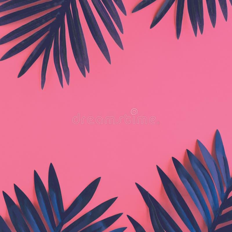 Tropisk sidalövverkväxt tätt upp med bakgrund för färgkopieringsutrymme Natur- och sommarbegreppsidéer royaltyfri bild