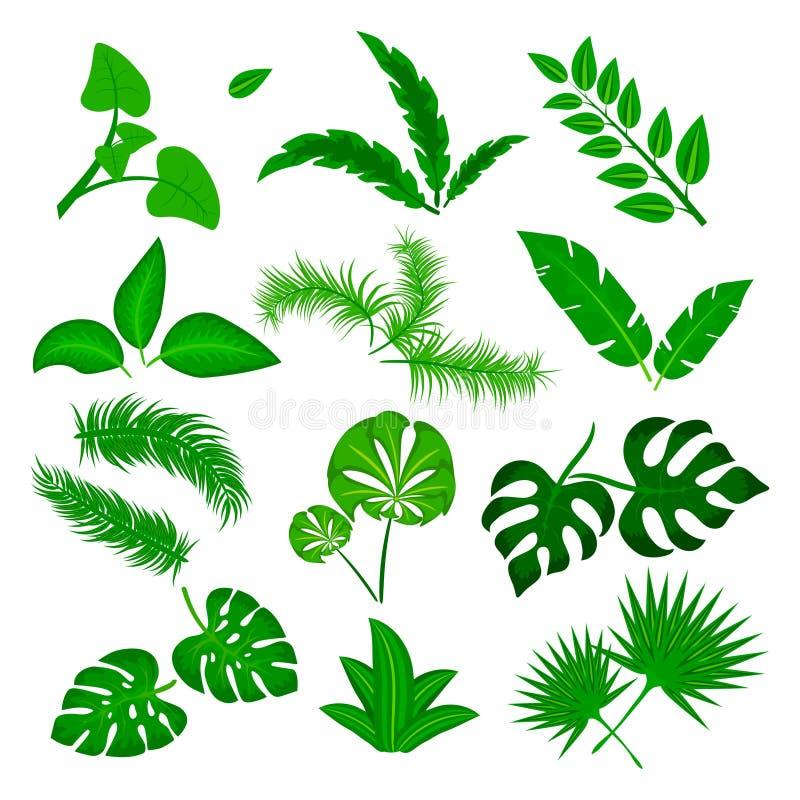 Tropisk sidavektoruppsättning som isoleras på vit bakgrund Olik grön bladsamling Djungelskogflora banan stock illustrationer