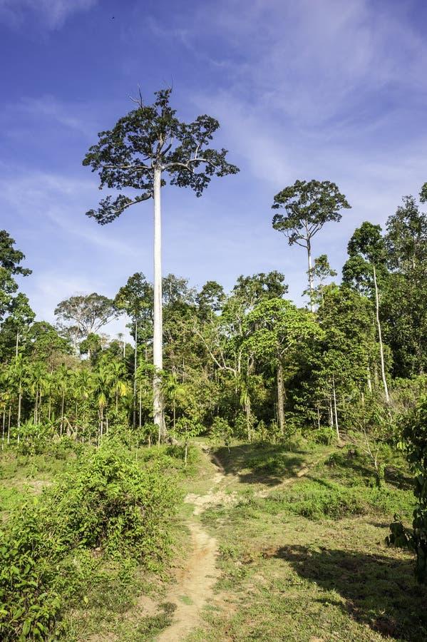 tropisk skog royaltyfria bilder