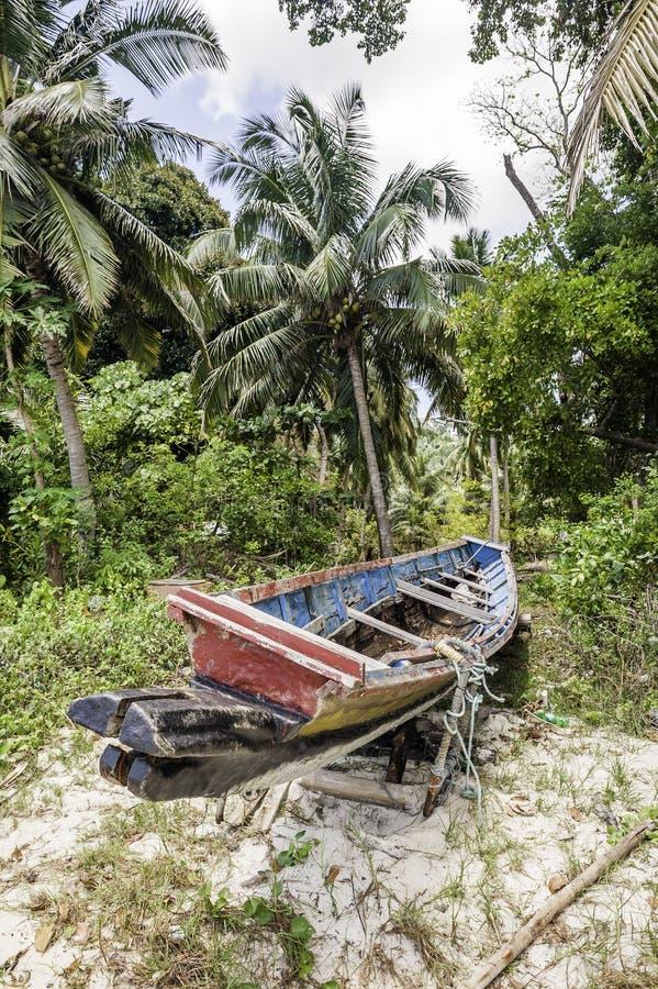 tropisk skog fotografering för bildbyråer