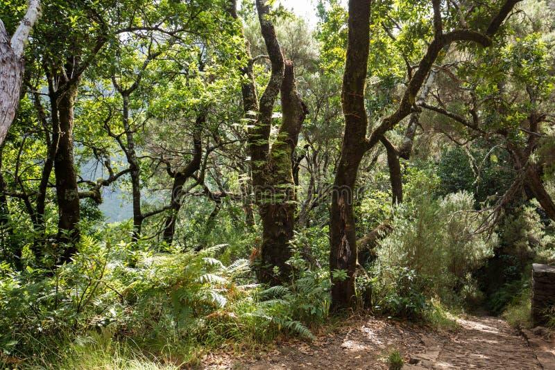 Tropisk skog i bergen på madeira royaltyfria foton