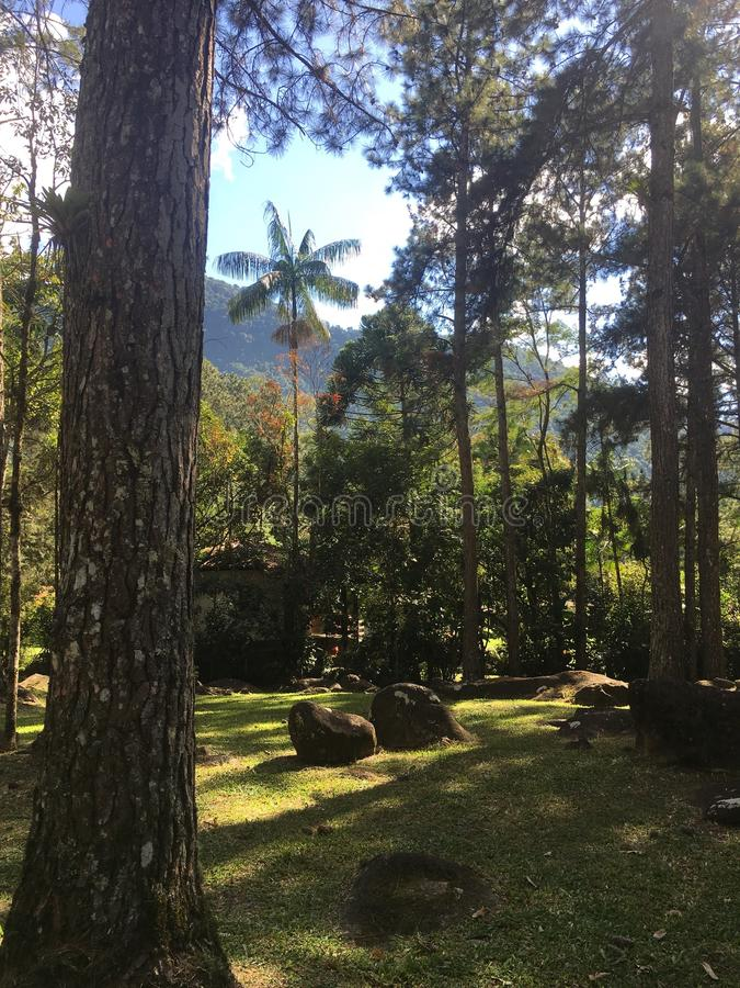 tropisk skog i Penedo, Brasilien arkivbild