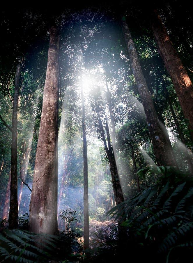 tropisk skogbana