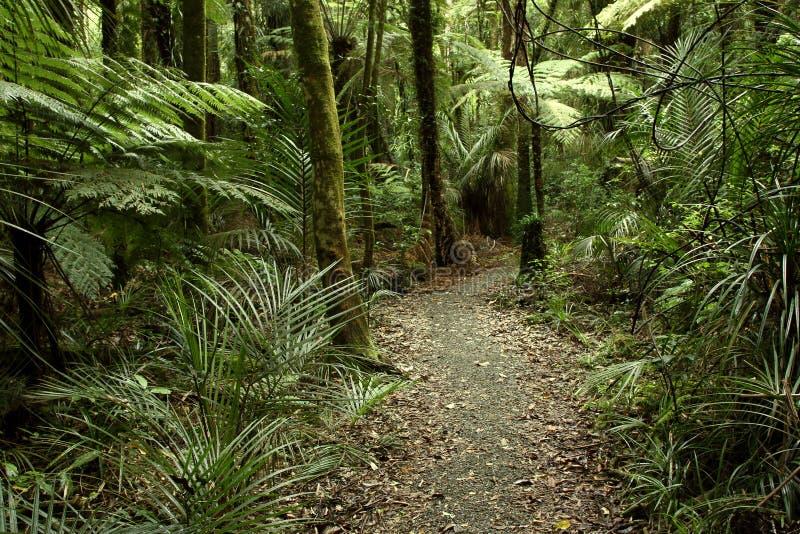 Tropisk skogdjungel royaltyfri fotografi