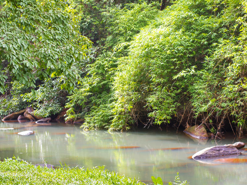 Tropisk skoginTattonnationalpark, Chaiyaphum thailand arkivfoto