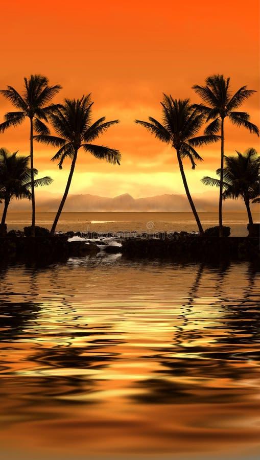tropisk solnedgång fotografering för bildbyråer