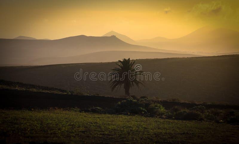Tropisk solnedgång med en palmträd royaltyfria bilder
