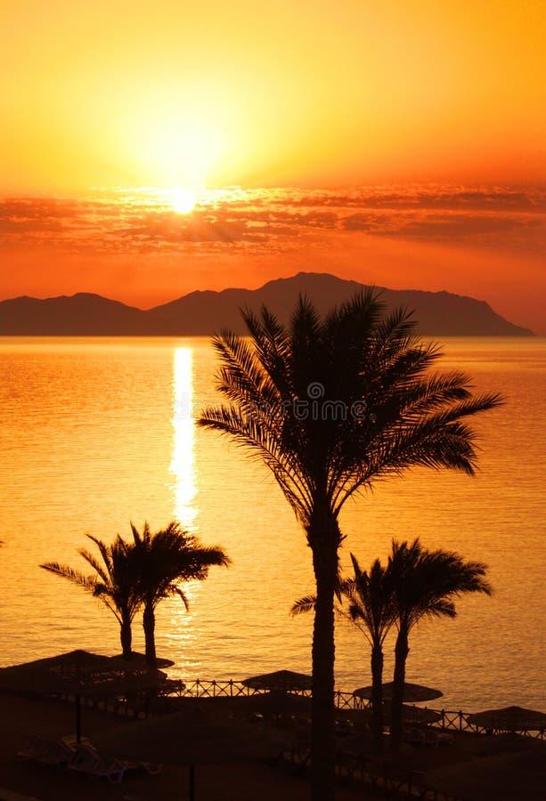 Tropisk solnedgång med palmträdkonturn arkivbild