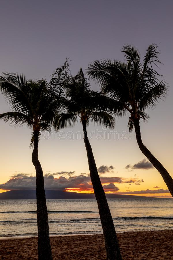 Tropisk solnedgång på Maui royaltyfri fotografi
