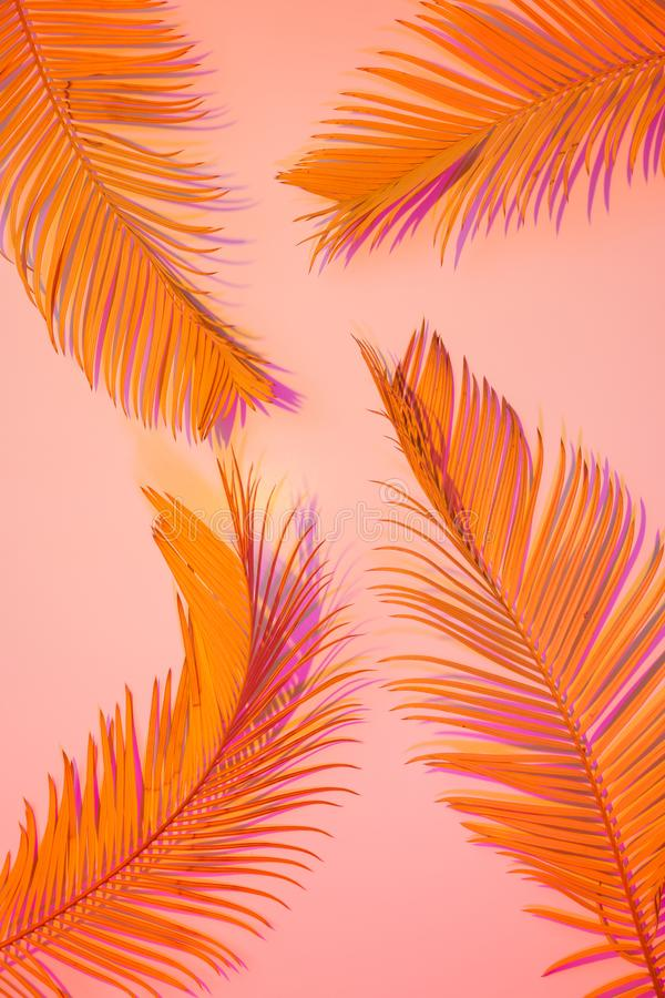 Tropisk sommarbakgrund - färgrika exotiska sidor royaltyfria foton