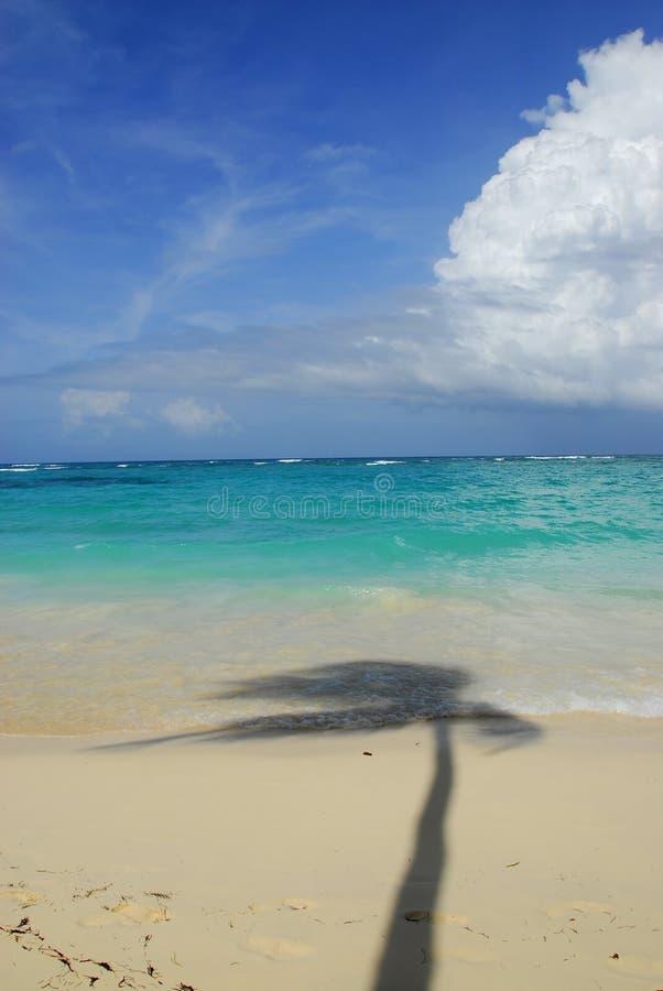Tropisk Strand Gratis Foto