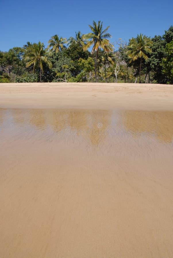 Tropisk strand i avlägsna norr Queensland, Australien arkivfoto