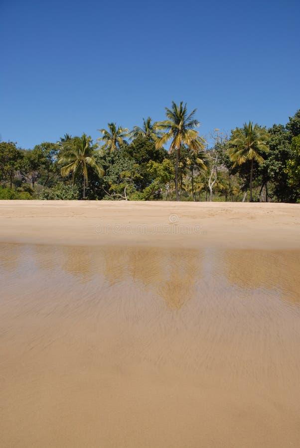 Tropisk strand i avlägsna norr Queensland, Australien royaltyfria foton