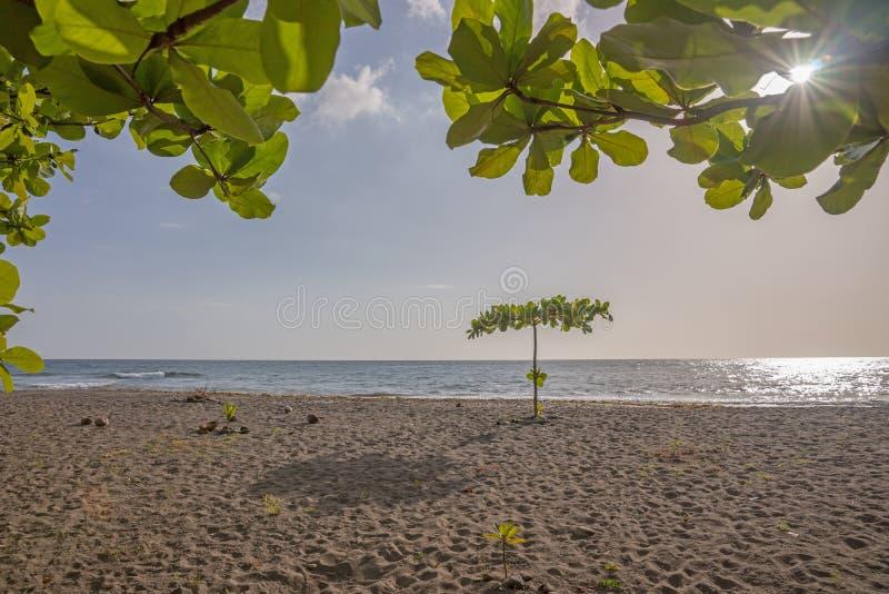 Tropisk strand i Dominica royaltyfri foto