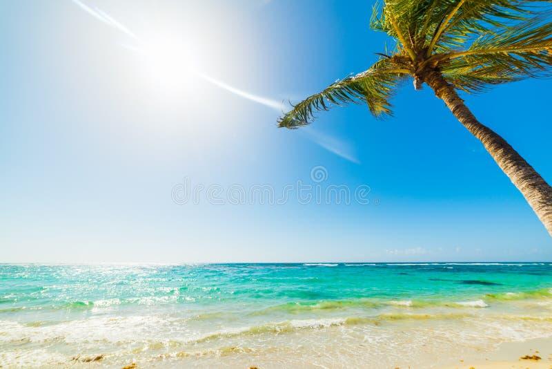 Tropisk strand i Guadeloupe royaltyfri foto