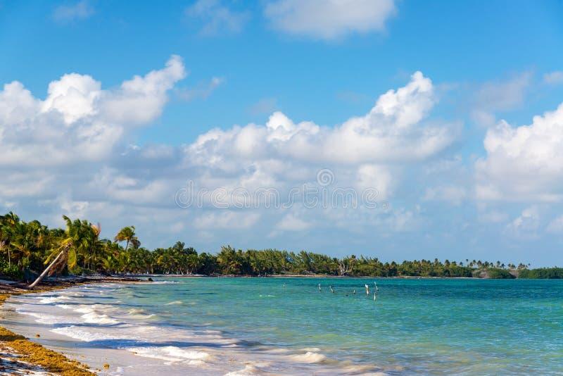 Tropisk strand i Punta Allen fotografering för bildbyråer