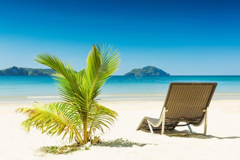Tropisk strand med den soldagdrivare och palmträdet arkivfoton