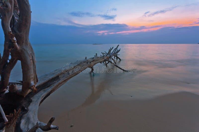 Tropisk strand med det gamla trähindret på solnedgången royaltyfri bild