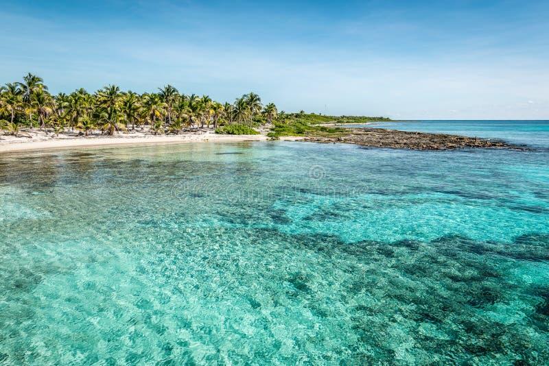 Tropisk strand med palmträd och turkosvatten i hamnen i Costa Maya, Mexiko royaltyfri bild
