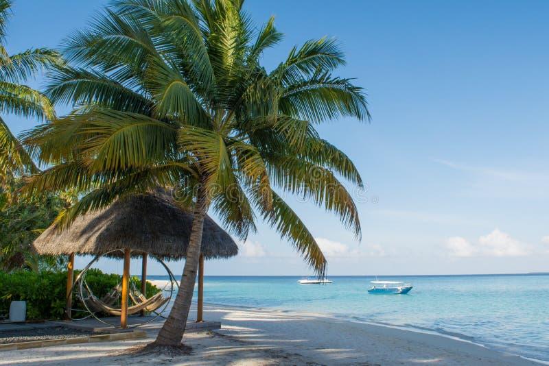 Tropisk strand med palmträdet och hängmattan nära havet på Maldiverna arkivfoton
