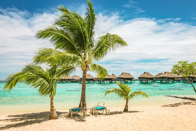 Tropisk strand med palmtr?d och sols?ngar royaltyfri bild