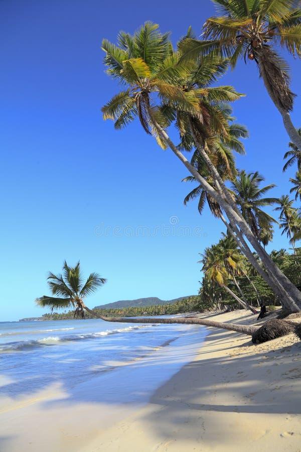 Tropisk strand nära den Las Galeras byn i Samana område, Dominikanska republiken royaltyfria foton