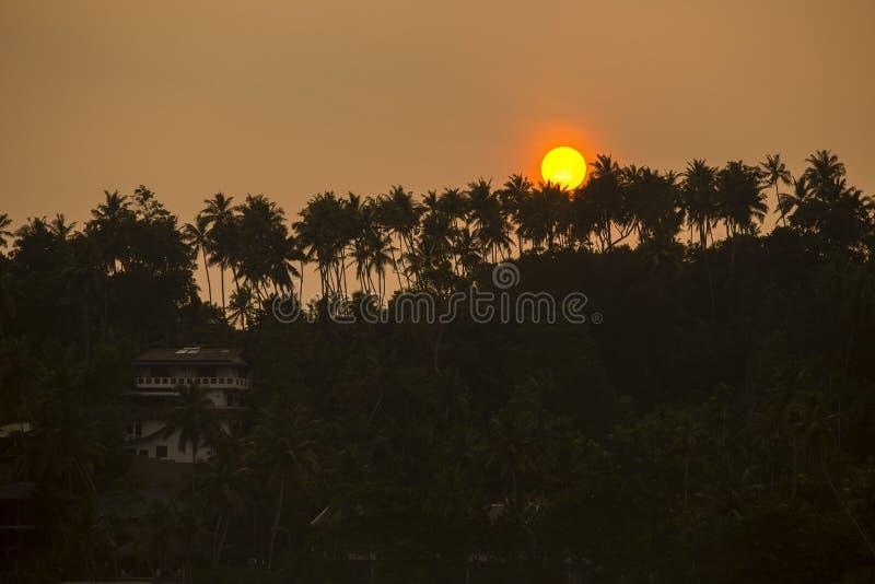 Tropisk strand- och konturkokosnötpalmträd under solnedgång, Sri Lanka royaltyfria foton