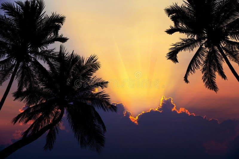 Tropisk strand på solnedgång med konturpalmträd royaltyfria foton