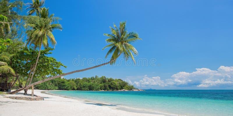 Tropisk strandpanorama med en lutande palmträd, Bintan ö nära Singapore Indonesien royaltyfria foton
