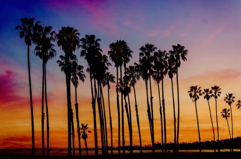 Tropisk strandsolnedgång med höjdpalmträdsihouette i Califor fotografering för bildbyråer