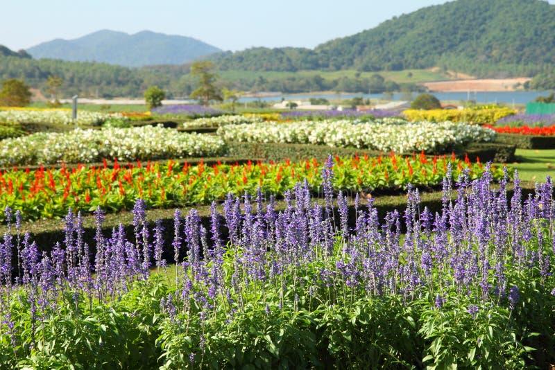Tropisk trädgård royaltyfri bild