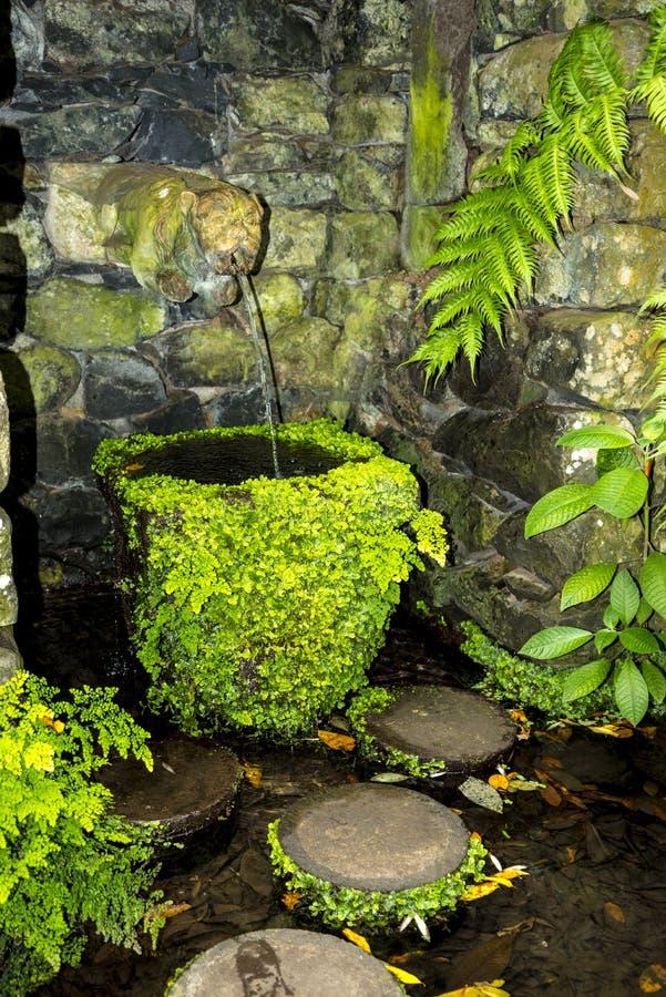 Tropisk trädgård på Monte ovanför den Funchal madeiran arkivbilder